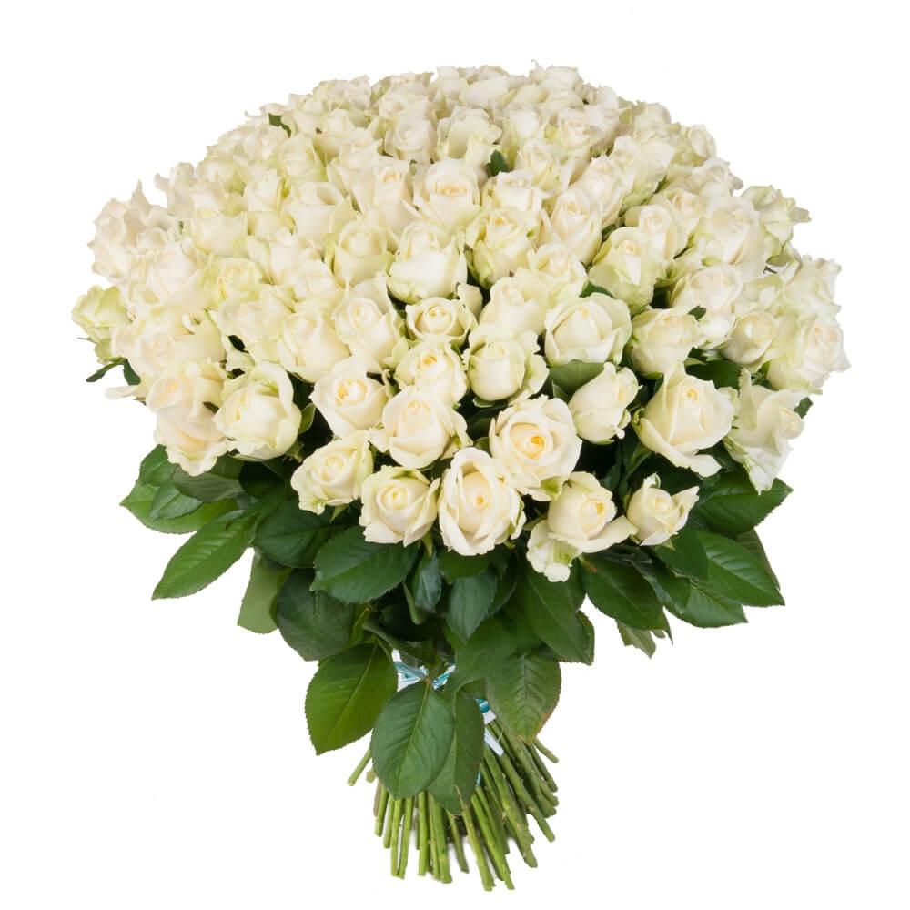 Белые розы букет фото