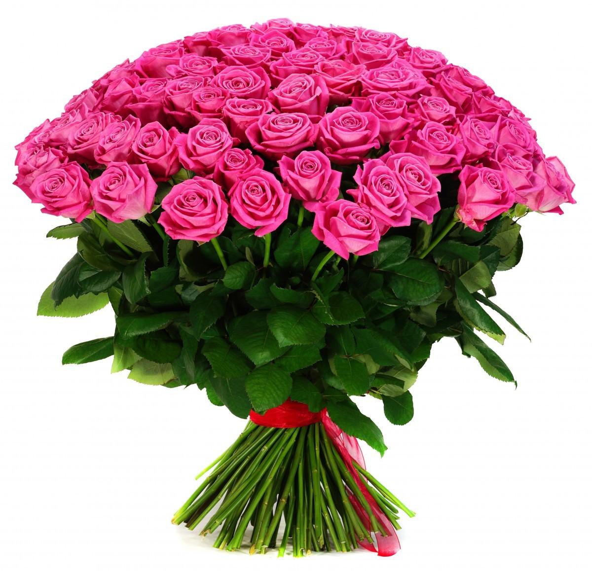Самые красивые розы мира фото розовые счет